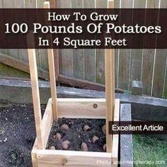 Good idea squares, 100lbs, potatoes, 100 pound, garden idea, grow potato, 100 lbs, grow 100, squar feet