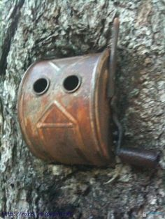 Antique pencil sharpener grown into a tree in the forest.