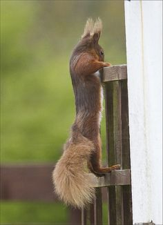 Woooaaahhh...now THAT's nuts. (You didn't know the squirrels were watching, did you?)