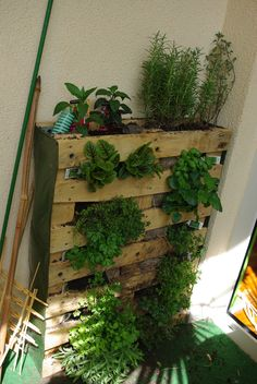 herb garden, small places, vertic herb, herbs garden, wood pallets, old pallets
