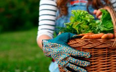 8 Delicious Organic Vegetables That Love Shade