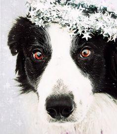 Festive pups!
