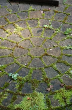 moss between pavers