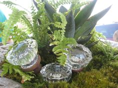 Use old doorknobs to add a little sparkle to any planter! Follow Fernwood for other fun ideas like this one!