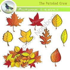 Autumn Leaves Clipart Set with Color & Black and White Graphics from The Painted Crow on TeachersNotebook.com -  (1 page)  - Add some fall color with this useful, 18 piece Autumn Leaves clipart set featuring leaves from a variety of tree species, and one big old mixed leaf pile. Included are 9 color graphics & 9 black and white versions.