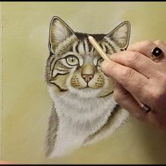 Learn to Draw and Paint Cats using Pastel Pencils by Colin Bradley Art. paint cat, paint anim, pastel pencil, lil paint