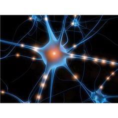 Potential Causes of Fibromyalgia
