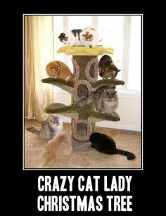 Crazy cat lady Christmas tree http://sulia.com/channel/cats/f/774594b2-6b88-4b42-913d-cd6b68809152/?