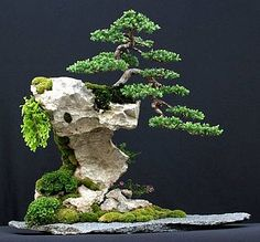 bonsai - Penjing vs Bonsai