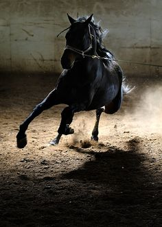 """If your horse says no, you either asked the wrong question, or asked the question wrong.""  ~Pat Parelli"