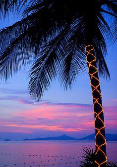 holiday, palm tree, purple christmas, sunset beach, christmas decorations, tropical christmas, light, christmas trees, tropical places