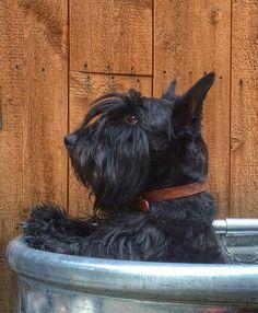 Albert in new bath tub.