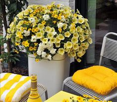Red Fox Confetti Garden Pineapple Punch:  Bidy Gonzales bidens, Potunia Plus Yellow petunia, and Empress Flair White verbena