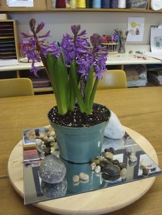 """""""Slow down and smell the flowers: blog on the Reggio Approach and the importance of slowing down, watching and listening.""""  Hyacinths placed on the table to provoke the children's interest at Crayons, wands & Building Blocks ≈≈"""