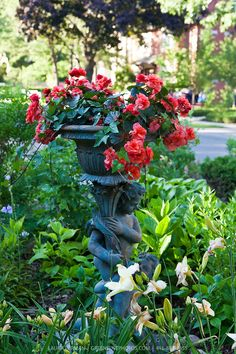 Red begonias and ivy in a classical urn