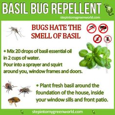 Got insect pests? Grow more basil:
