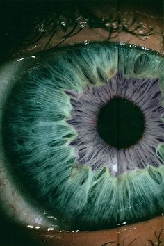 window, eye colors, blue, macro photography, violet
