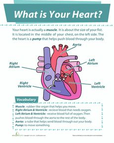 Science Respiratory and Circulatory on Pinterest | Circulatory ...