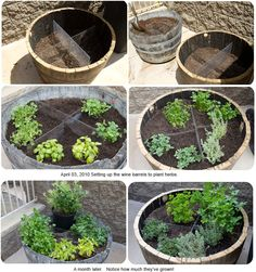 garden container, garden ideas, wine barrels, whiskey barrels, herbs garden, planter, garden design ideas, deck, herb gardening