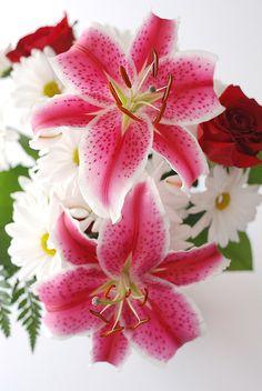 Stargazer Lilies from a dear friend.