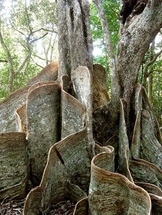 Weird Trees from around the world? I don't know what else to say
