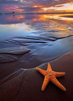 Orange Starfish & Sunset in Starfish Beach, Water Cay Cayman Islands © Rick Lundh