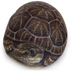An old tortoise painted on a sea rock by Robert Rizzo