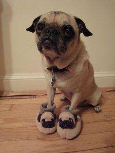 Pug on Pug