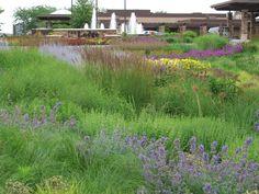 Roy Diblik, co-owner of Northwind Perennial Farm in Burlington, WI installed the perennial gardens at the Grand Geneva Resort in Lake Geneva, WI.