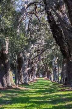 City Park in New Orleans is a 150-year-old, 1,300-acre expanse of moss-draped oaks and 11 miles of gentle lagoons is just 2 miles from the French Quarter, but feels like it could be another world.