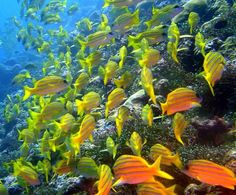 The Tubbataha Reefs