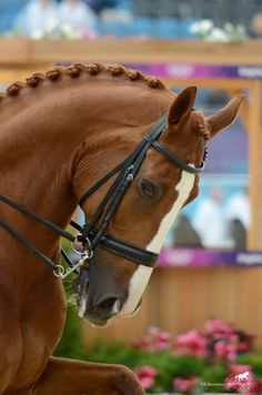 Mistral Hojris (Alf) at the London 2012 Olympic Team Dressage Grand Prix Final. Taken just before the medal giving ceremony (: