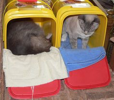 Recycle cleaned kitty litter containers into cat beds!