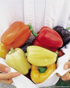 How to Grow 'Carnival' Peppers