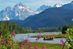 Chilkat River Adventure. Eagles Galore. MUST DO!