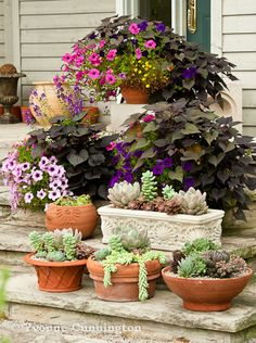 a collection of tropical succulents, and petunias with dark leafed sweet potato Vine
