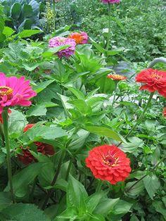 youth gardeners program