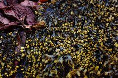 #Esprit Fall/Winter 2013 Campaign - Eggplant Seaweed