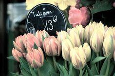 Pretty French tulips