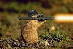 jedi squirrels gif | http://i253.photobucket.com/albums/hh55/Sirtito31/bazooka20squirrel ...