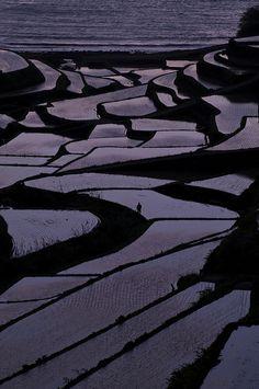 Japanese terraced rice paddies, Saga, Japan: photo by comolebi*, via Flickr