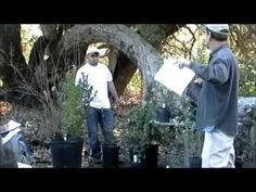 Foundation CA native plants