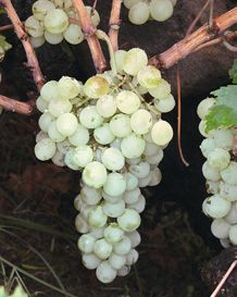 Wines i love on pinterest wine rooms wine list and - Olive garden moscato primo amore ...