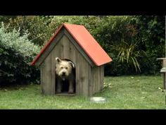 Travelers Insurance   The Cat Burglar Dog Commercial