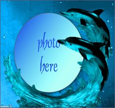 Dolphins http://imikimi.com/main/view_kimi/lQvb-1Fu