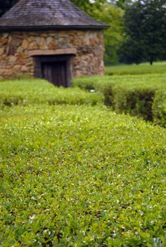 Hedge Labyrinth from West of the Moon Writer's Retreat by Lafayette Wattles, via Behance