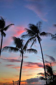 ✮ Tiki Palm Sunset