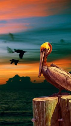 bird, Sunrise, Pelican