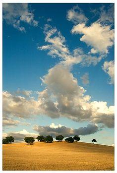 Alentejo cork trees - Portugal