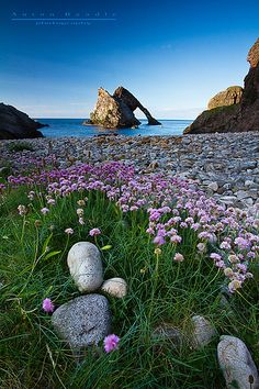 Bow Fiddle Rock in the spring, Portknockie, Scotland